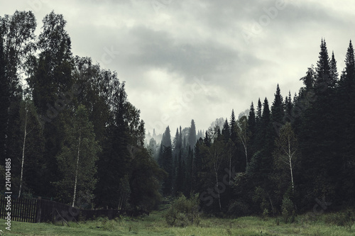 Fotobehang Khaki Gloomy atmosphere of evening in dark forest. High firs and pines in fog. Overcast weather and spooky haze in taiga. Mist among layers from trees. Eerie landscape in horror style in faded tones.