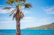 Vacances d'été sous les palmiers