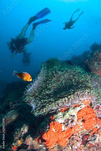 Divers explores tropical coral reef.