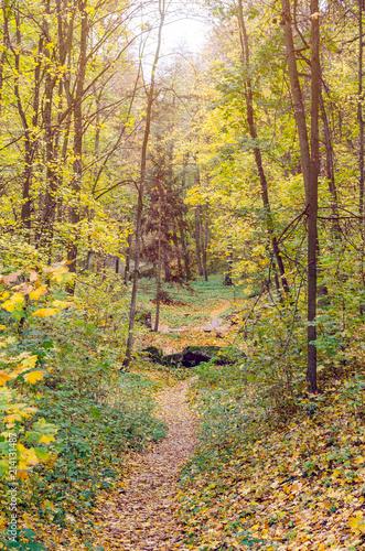 Foto op Canvas Herfst Beautiful autumn park strewn with fallen leaves