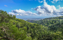 Top Of Troodos Mountain In Cyp...