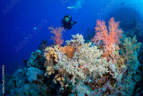 Cuadros en Lienzo Woman diver explores the colours on the reef at the Habil Jafar dive site in the