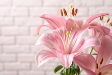Beautiful Blooming Lily Flowers On Brick Wall Background