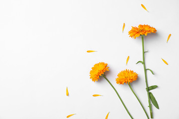 Flat lay composition with wild flowers on white background