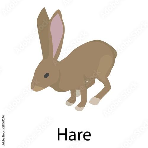 Cuadros en Lienzo Hare icon