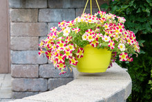 Hanging Flowerpot Of Colorful ...