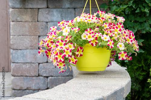 Fotomural Hanging flowerpot of colorful variegated petunias
