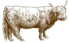 Engraving  Illustration Of Hig...