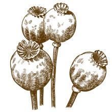 Engraving Illustration Of Four...