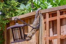 Determined Squirrel Invading A...