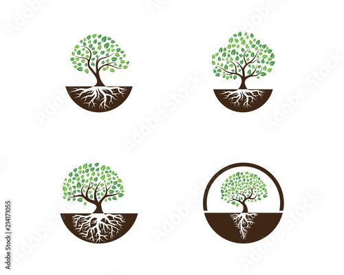 Cuadros en Lienzo Logos of green Tree leaf