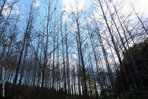冬木立、背景素材