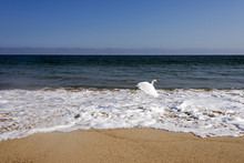 A Flying Seagull Over The Waves In The Ocean In Malibu, Los Angeles, USA IN SUMMERTIME