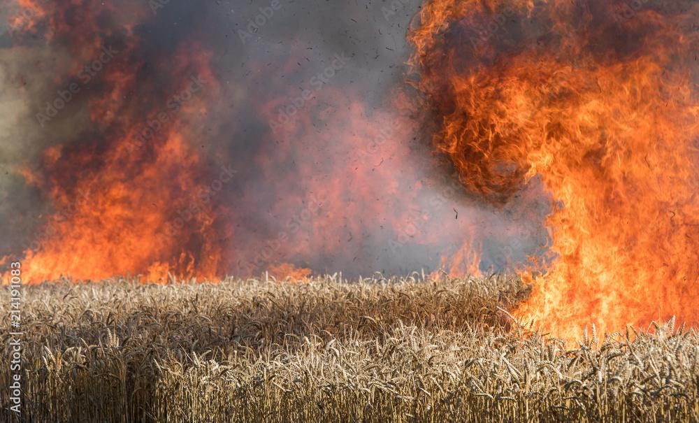 Fotografie, Obraz Feldbrand, brennendes Weizenfeld
