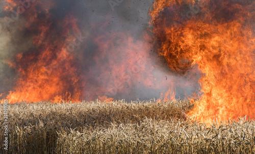 Valokuvatapetti Feldbrand, brennendes Weizenfeld