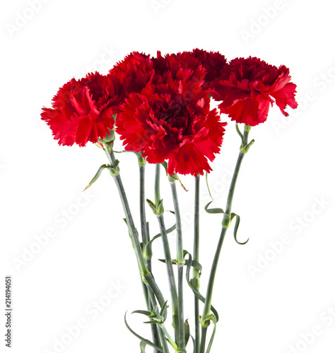 Photo  red carnation flowers isolated on white background