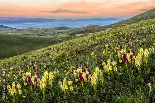 Fotografia, Obraz Mountains Landscape field of flowers Campo Imperatore