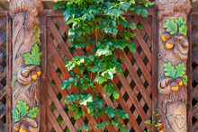 Wild Vines On A Wooden Fence W...