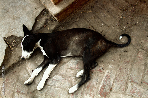 poor homeless skinny lorn dog on streets of city. Canvas Print