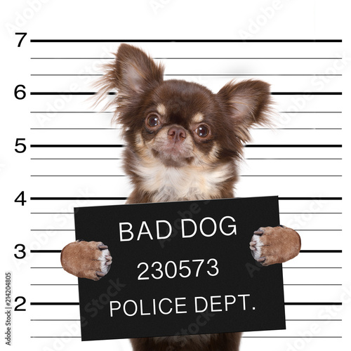Poster Crazy dog police mugshot dog