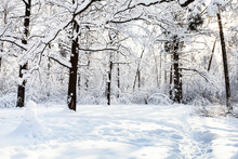 Snowman On Snowy Glade In Oak Grove In Forest