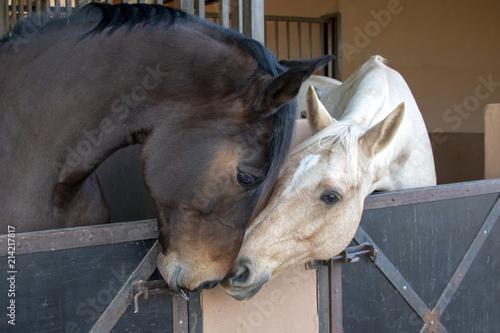 Foto op Canvas Paarden Stables talk