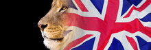 Close-up Lion Portrait Blended With The Union Jack Banner