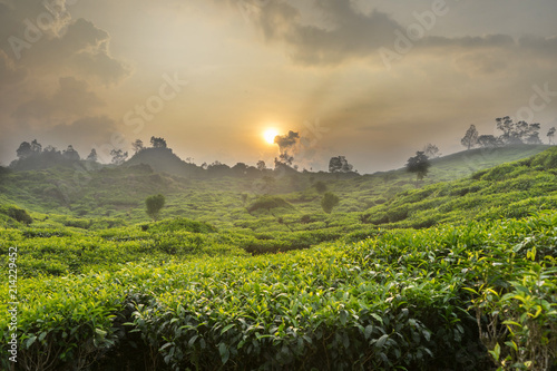 Staande foto Pistache Tea garden landscape at Bandung West Java Indonesia. Tea plantation awesome view of nature environment