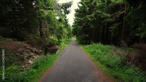 Asfaltowa droga prowadząca przez ciemny, mroczny las