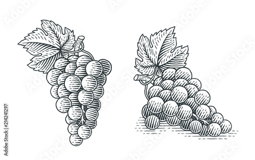 Canvas Print Grapes. Hand drawn engraving style illustrations.