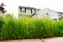Very Tall Grass Of Vacant Aban...