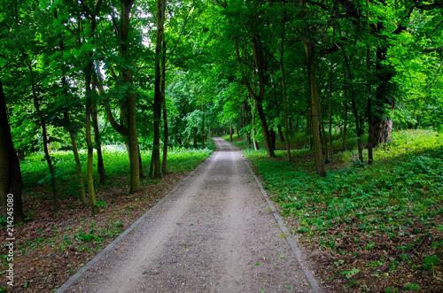 Fotobehang Weg in bos park