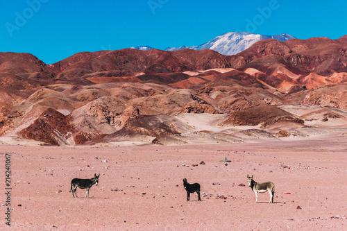 Fotografering  Deserto do Atacama