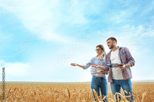 Fototapeta Young agronomists in grain field. Cereal farming obraz