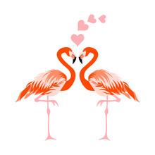 Flamingo Bird Vector Illustration Background.