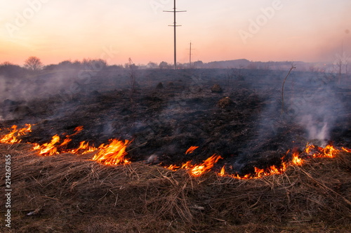 Fotografiet  On a hot summer day, dry grass is burning on the field