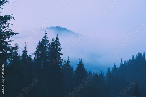 Aluminium Prints Blue sky Misty landscape with mountains and fir forest in hipster vintage retro style