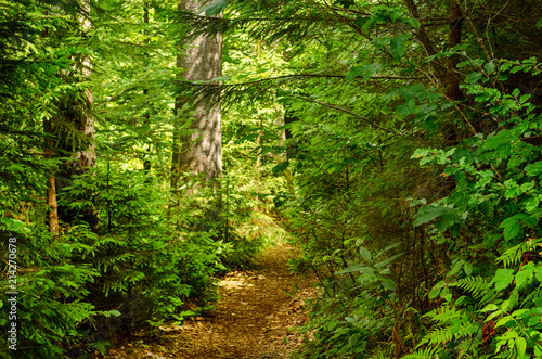 Foto op Canvas Weg in bos Summer green forest with path, natural outdoor seasonal background.