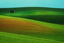 Rural Landscape With Green Fie...