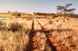 canvas print picture - Kalahari path