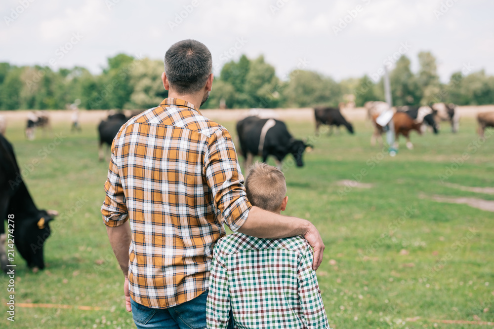 Obraz back view of father and son standing together and looking at cows grazing on farm fototapeta, plakat