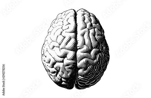 Fotografia Monochrome drawing brain vintage style