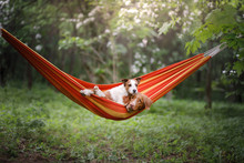 Pet In A Hammock On Vacation. ...