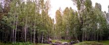 A Little Piece Of Forest Heaven