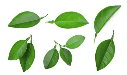 set of lemon green leaf isolated on white background