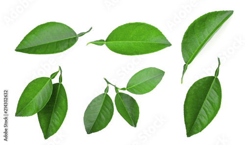 set of lemon green leaf isolated on white background