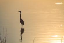 Bird In Golden Light