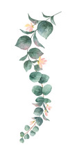 Watercolor Vector Hand Painted Silver Dollar Eucalyptus Leaves And Pink Flowers.