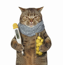 The Sick Cat Is Holding A  Thermometer And A Bottle Of Pills. White Background.