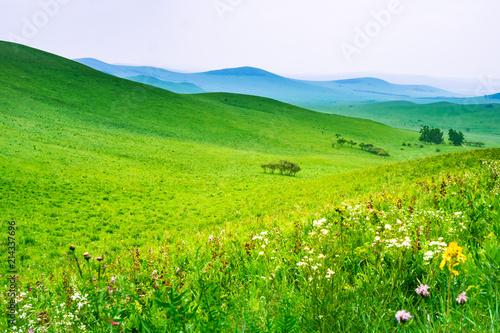 In de dag Lime groen Prairie with flowers blooming